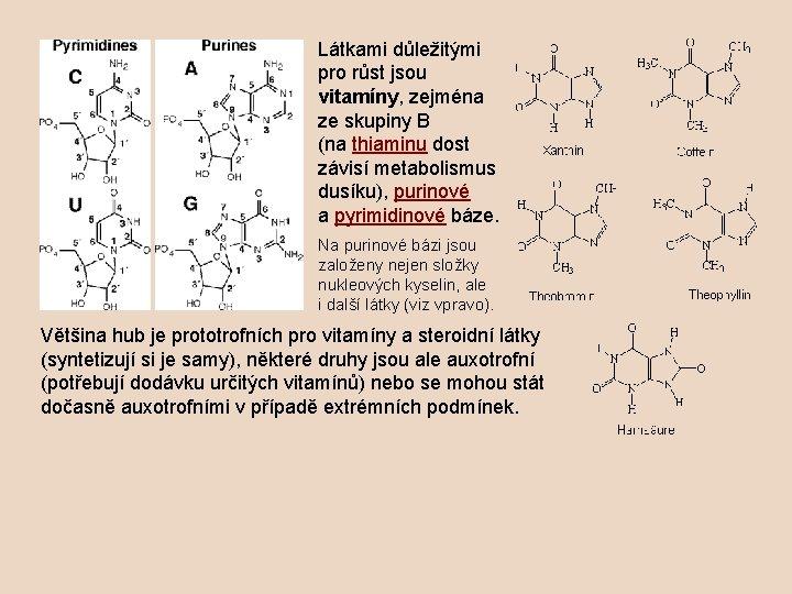 Látkami důležitými pro růst jsou vitamíny, zejména ze skupiny B (na thiaminu dost závisí