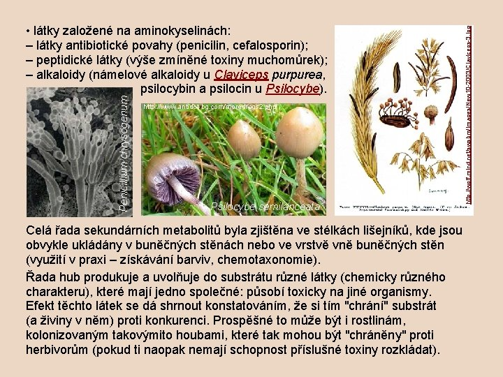 http: //www. antidot-bg. com/moredrogs 2. php Psilocybe semilanceata http: //wolf. mind. net/swsbm/Images/New 10 -2003/Claviceps-3.