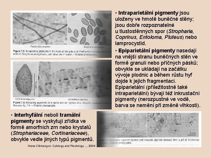 • Intraparietální pigmenty jsou uloženy ve hmotě buněčné stěny; jsou dobře rozpoznatelné u