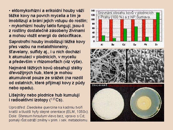 • ektomykorhizní a erikoidní houby váží těžké kovy na povrch mycelia a tím