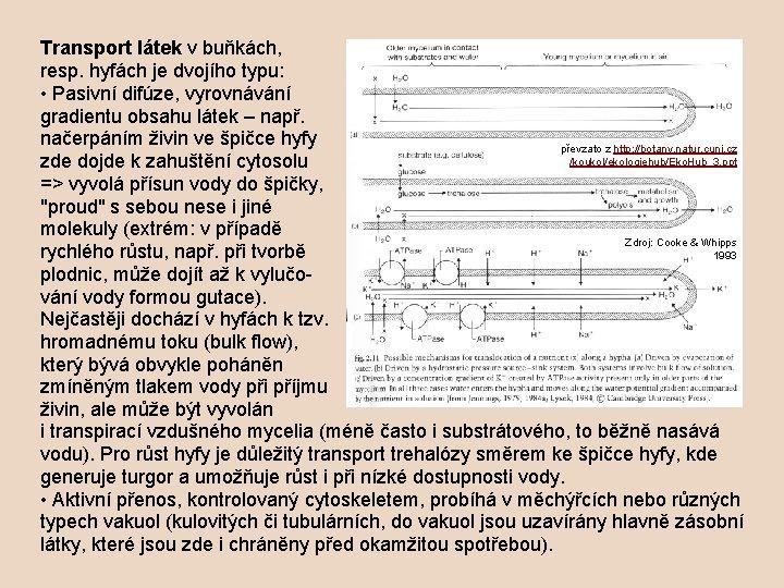 Transport látek v buňkách, resp. hyfách je dvojího typu: • Pasivní difúze, vyrovnávání gradientu