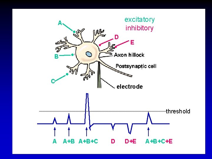 excitatory inhibitory A D E B C electrode threshold A A+B+C D D+E A+B+C+E