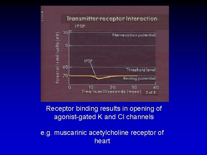 Receptor binding results in opening of agonist-gated K and Cl channels e. g. muscarinic