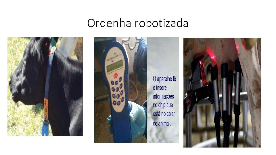 Ordenha robotizada