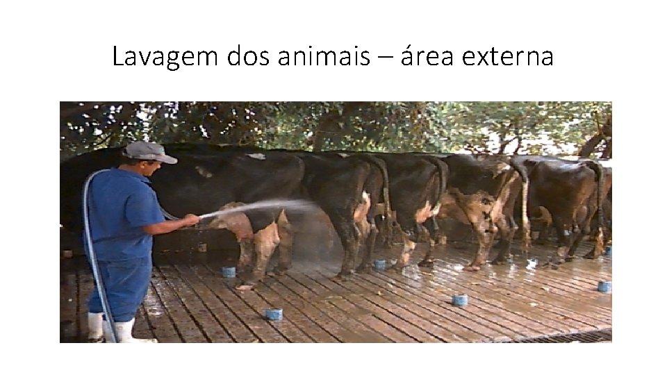 Lavagem dos animais – área externa