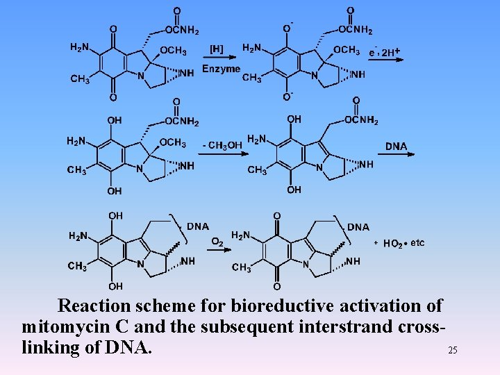 Reaction scheme for bioreductive activation of mitomycin C and the subsequent interstrand crosslinking of
