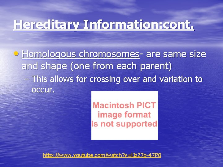 Hereditary Information: cont. • Homologous chromosomes- are same size and shape (one from each