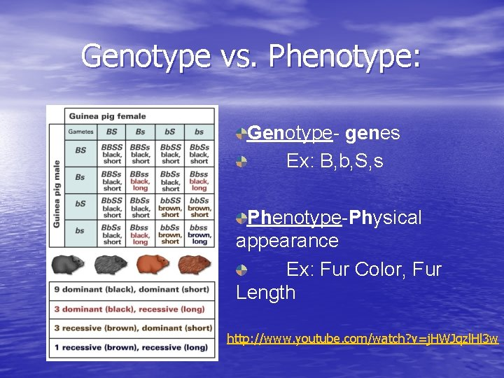 Genotype vs. Phenotype: Genotype- genes Ex: B, b, S, s Phenotype-Physical appearance Ex: Fur