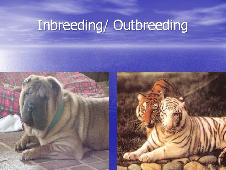 Inbreeding/ Outbreeding