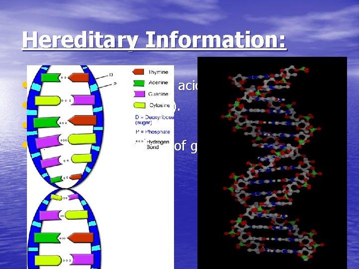 Hereditary Information: • DNA- deoxyribonucleic acid • Organic (C, H, O, N, P). •