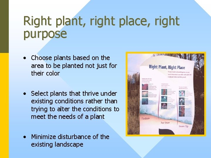 Right plant, right place, right purpose • Choose plants based on the area to
