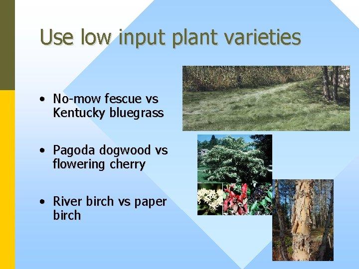 Use low input plant varieties • No-mow fescue vs Kentucky bluegrass • Pagoda dogwood