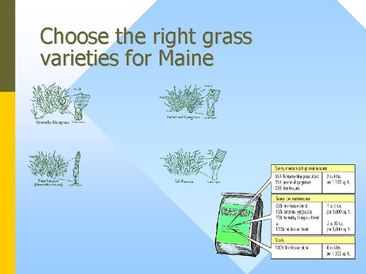 Choose the right grass varieties for Maine