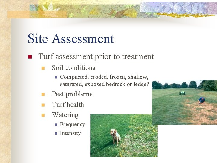 Site Assessment n Turf assessment prior to treatment n Soil conditions n n Compacted,