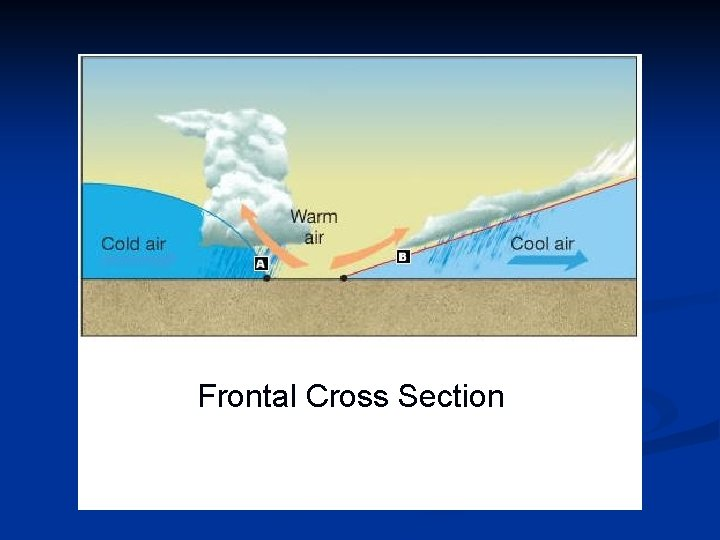Frontal Cross Section