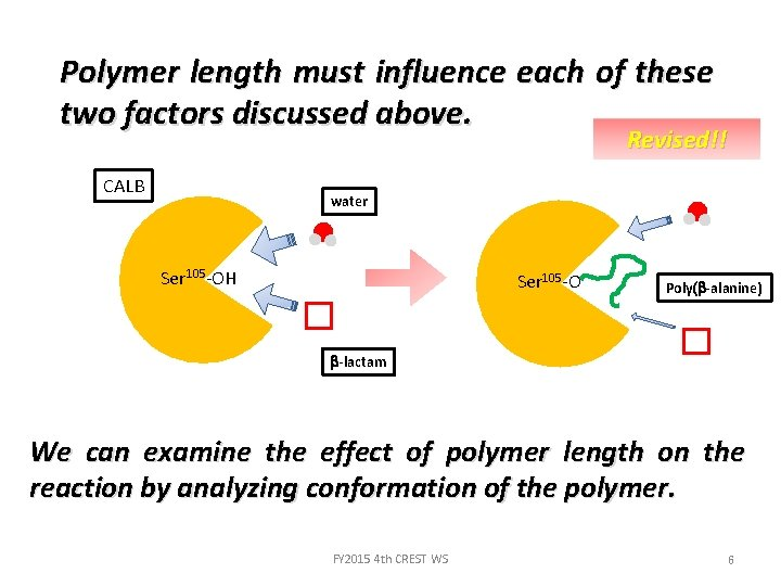 Polymer length must influence each of these two factors discussed above. Revised!! CALB water