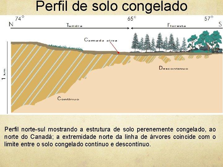 Perfil de solo congelado Perfil norte-sul mostrando a estrutura de solo perenemente congelado, ao