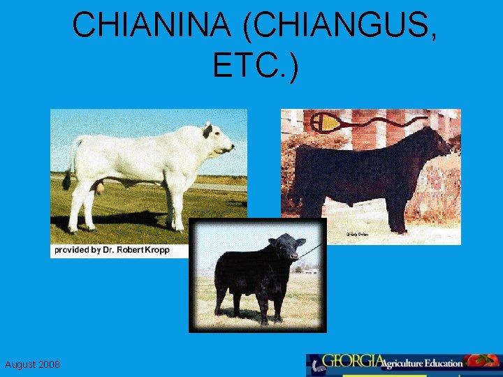 CHIANINA (CHIANGUS, ETC. ) August 2008