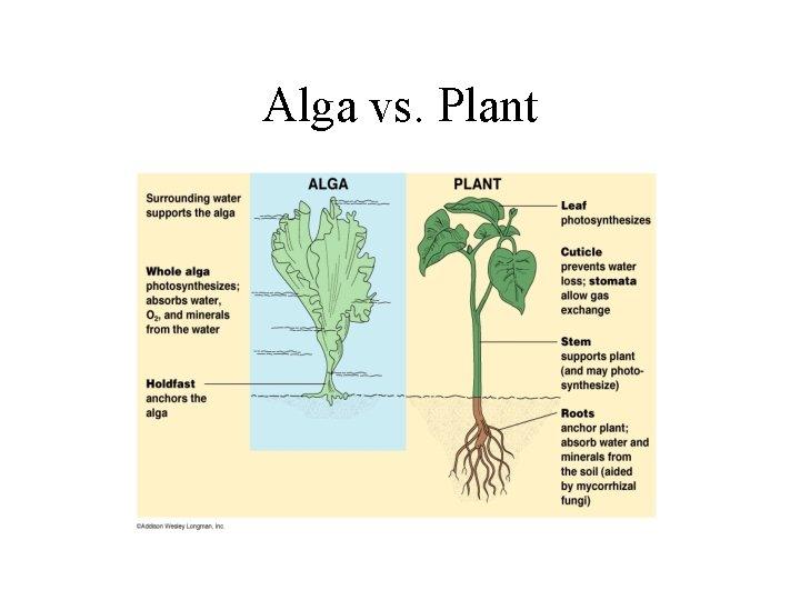 Alga vs. Plant