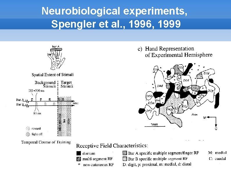 Neurobiological experiments, Spengler et al. , 1996, 1999
