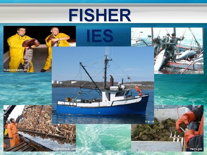 FISHER IES fieldandstream. com fao. org tc. gc. ca eujacksonville. com maine. gov