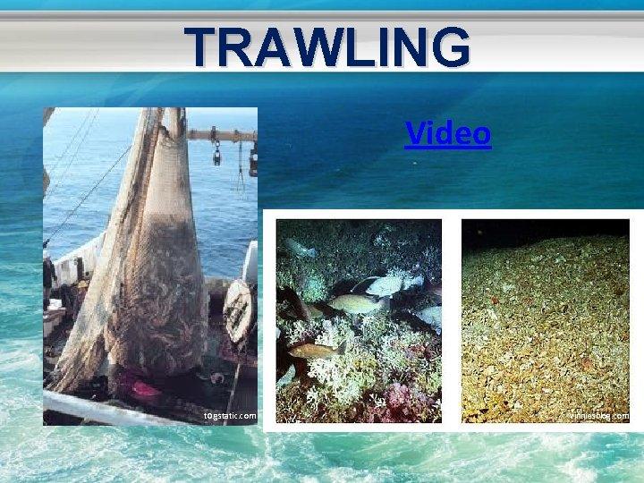 TRAWLING Video t 0. gstatic. com vinniesblog. com