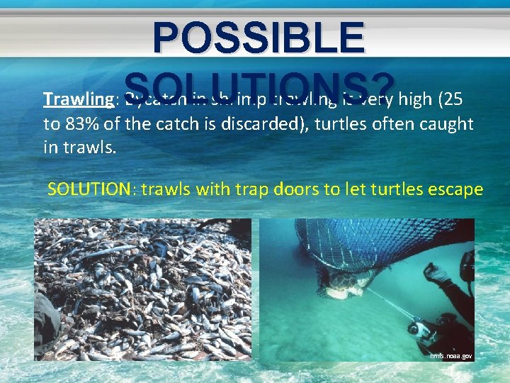 POSSIBLE Trawling: SOLUTIONS? Bycatch in shrimp trawling is very high (25 to 83% of