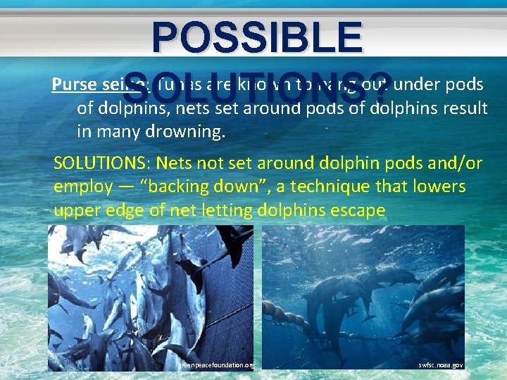 POSSIBLE Purse seine: Tunas are known to hang out under pods SOLUTIONS? of dolphins,