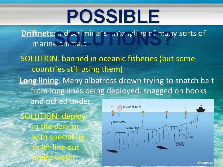 POSSIBLE Driftnets: indiscriminate entangling of many sorts of marine. SOLUTIONS? animals SOLUTION: banned in