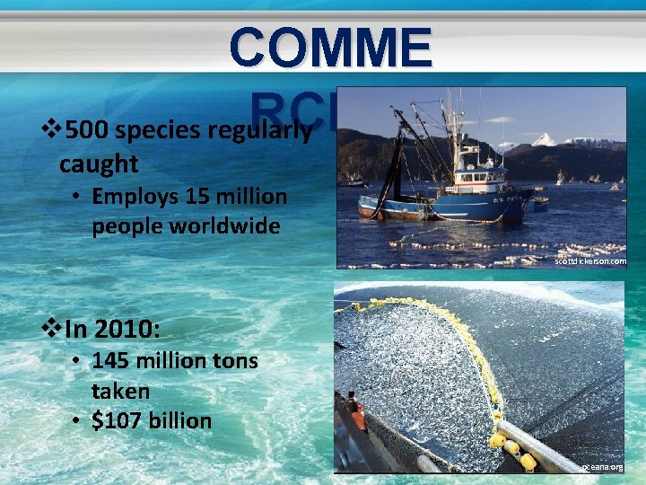 COMME RCIAL v 500 species regularly caught • Employs 15 million people worldwide scottdickerson.