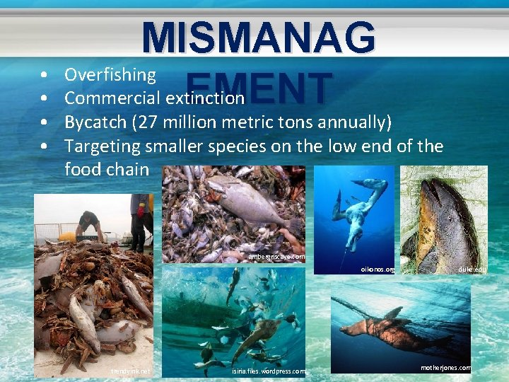 MISMANAG Overfishing EMENT Commercial extinction • • • Bycatch (27 million metric tons annually)