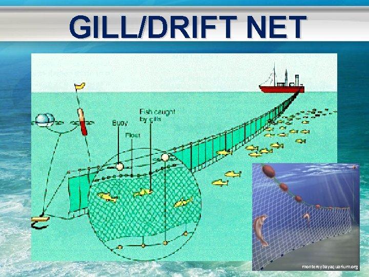 GILL/DRIFT NET montereybayaquarium. org