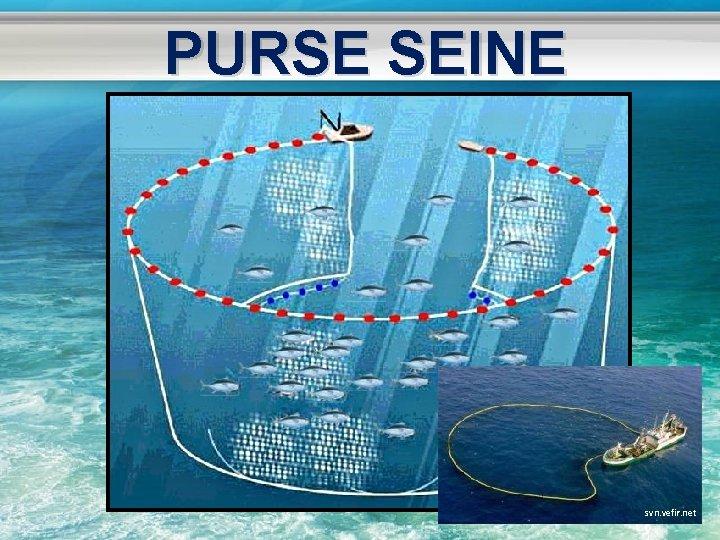PURSE SEINE svn. vefir. net