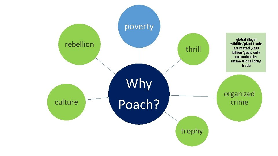 poverty rebellion culture thrill Why Poach? global illegal wildlife/plant trade estimated $200 billion/year, only