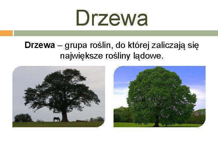 Drzewa – grupa roślin, do której zaliczają się największe rośliny lądowe.