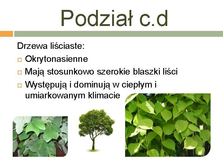 Podział c. d Drzewa liściaste: Okrytonasienne Mają stosunkowo szerokie blaszki liści Występują i dominują