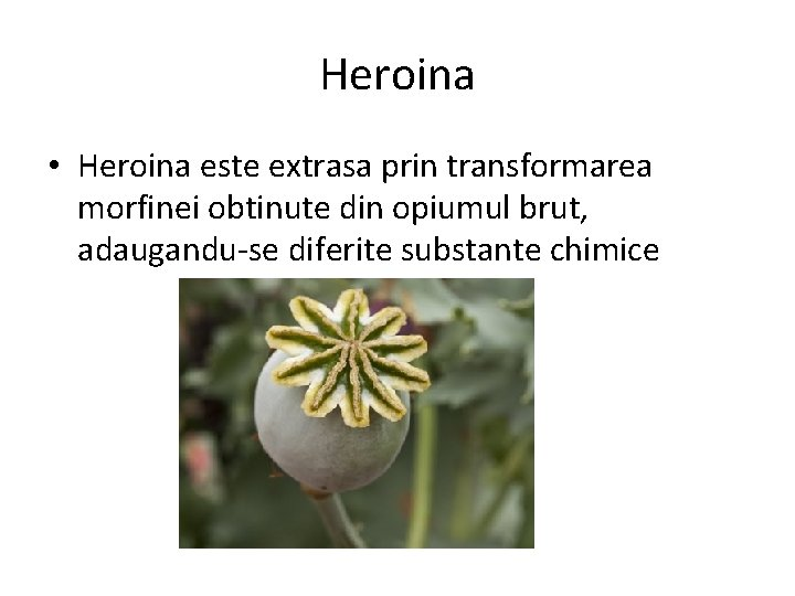 Dependența de heroină și problemele de greutate Michael; s Centre de tratament casnic