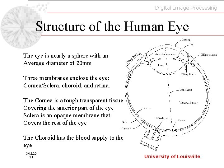 Digital Image Processing Structure of the Human Eye The eye is nearly a sphere