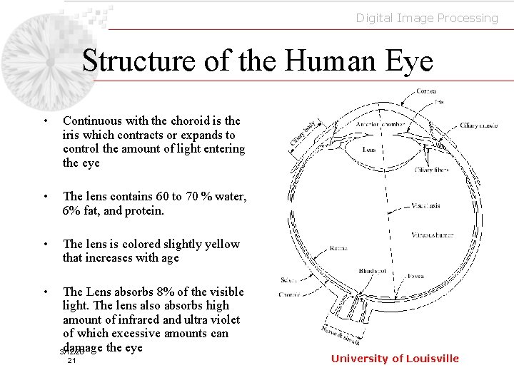 Digital Image Processing Structure of the Human Eye • Continuous with the choroid is