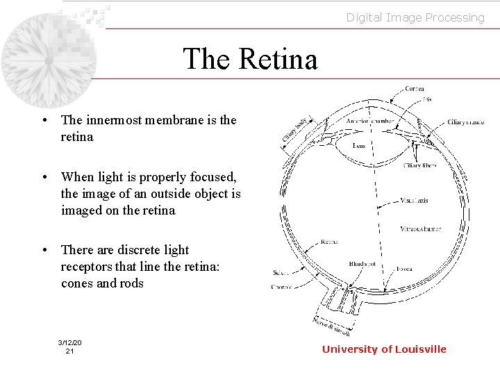 Digital Image Processing The Retina • The innermost membrane is the retina • When