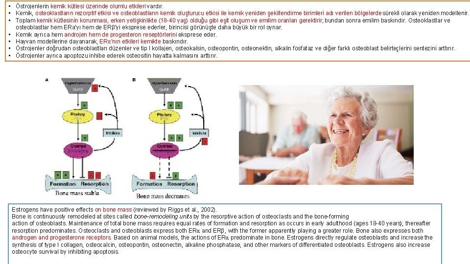 • Östrojenlerin kemik kütlesi üzerinde olumlu etkileri vardır. • Kemik, osteoklastların rezorptif etkisi