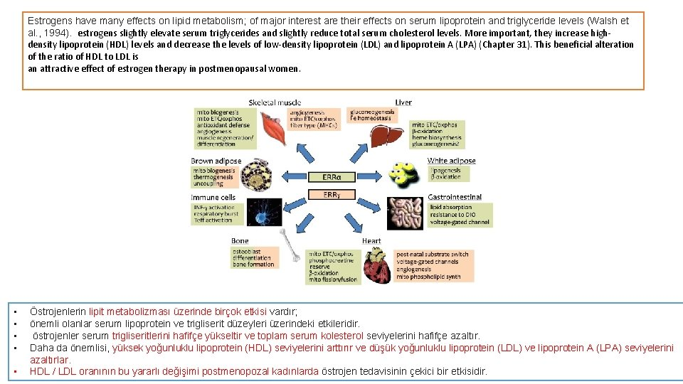 Estrogens have many effects on lipid metabolism; of major interest are their effects on