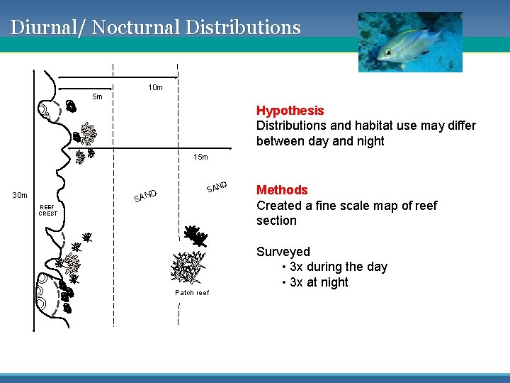 Diurnal/ Nocturnal Distributions 10 m 5 m Hypothesis Distributions and habitat use may differ