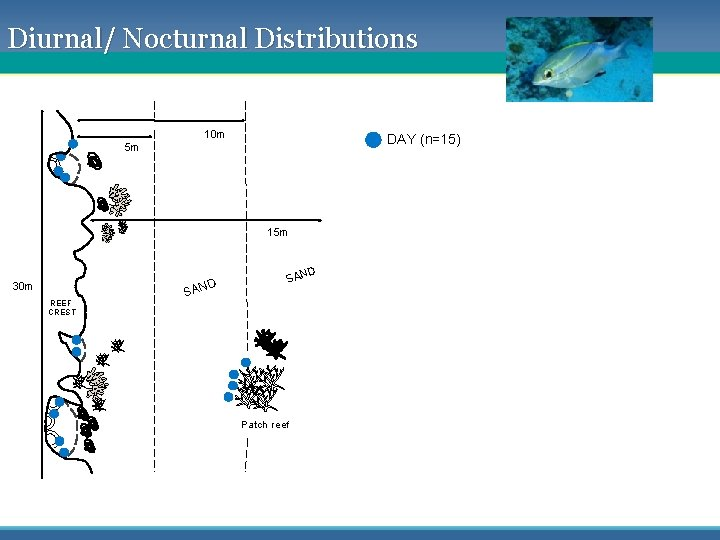 Diurnal/ Nocturnal Distributions 10 m DAY (n=15) 5 m 15 m D 30 m