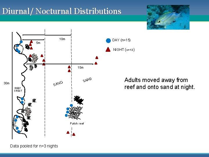 Diurnal/ Nocturnal Distributions 10 m DAY (n=15) 5 m NIGHT (n=13) 15 m 30