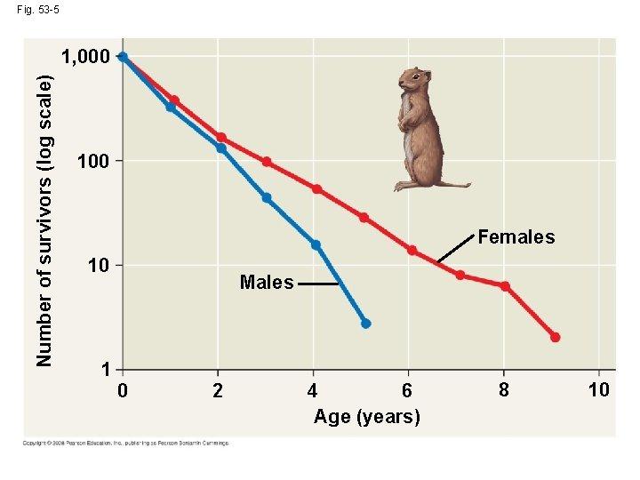 Fig. 53 -5 Number of survivors (log scale) 1, 000 100 Females 10 1