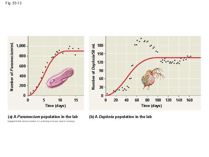Number of Daphnia/50 m. L Number of Paramecium/m. L Fig. 53 -13 1, 000
