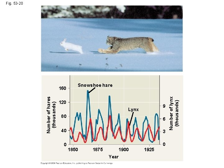 Fig. 53 -20 Snowshoe hare 120 9 Lynx 80 6 40 3 0 0