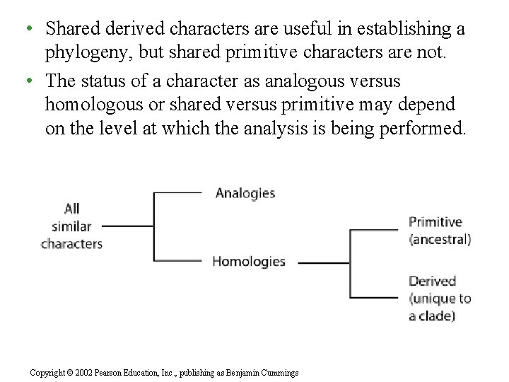 • Shared derived characters are useful in establishing a phylogeny, but shared primitive