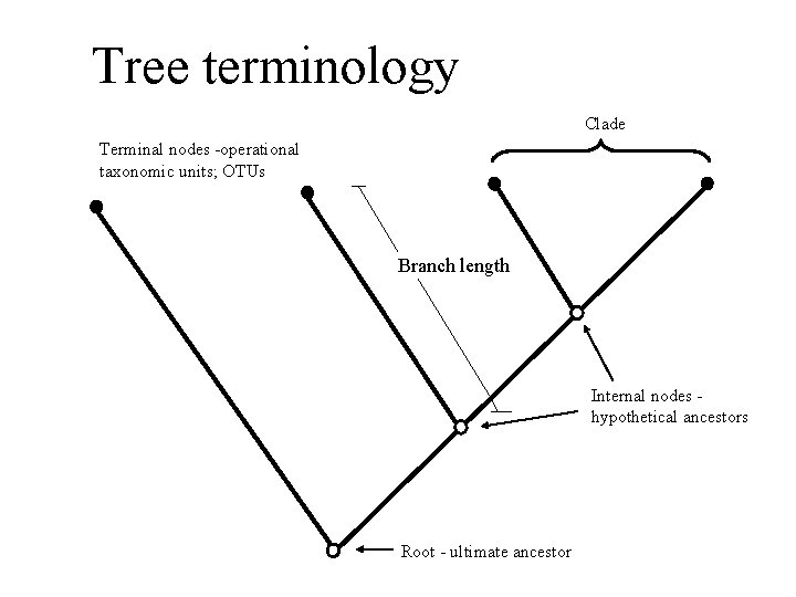 Tree terminology Clade Terminal nodes -operational taxonomic units; OTUs Branch length Internal nodes hypothetical
